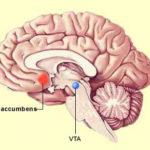 Neuromarketing nucleus accumbens